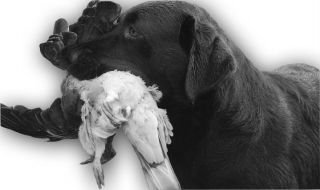 lacour_labrador-black-white.jpg-for-web-normal